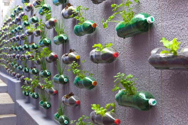 Vertikal køkkenhave lavet af hundredevis af tomme sodavandsflasker