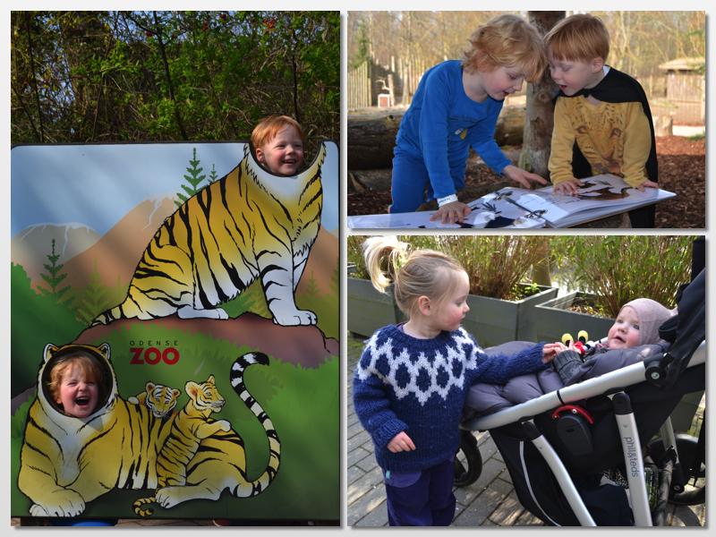 ålborg zoo årskort