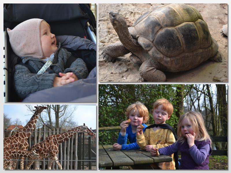 prono gratis årskort til ålborg zoo