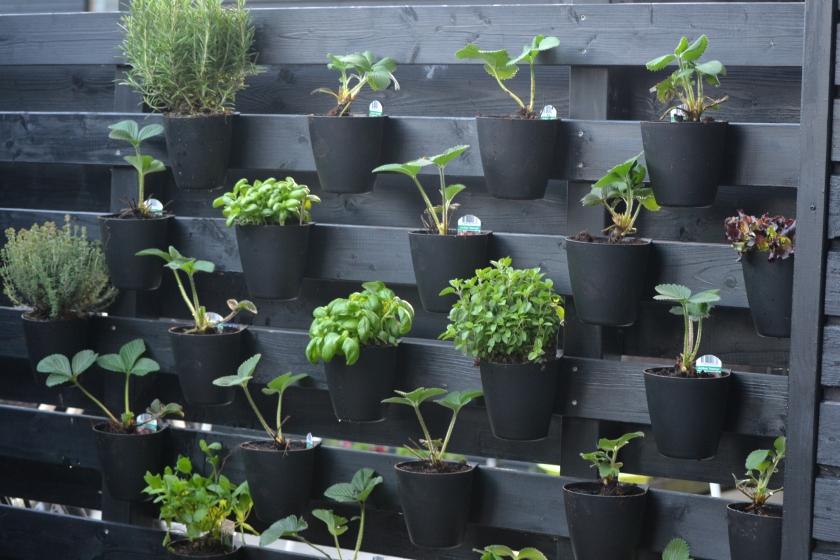 Sådan så det ud da jeg plantede det hele for 1,5 måned siden